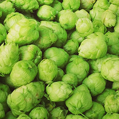 Home-Brew Hops
