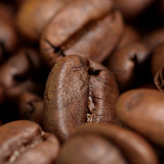 Beginners Guide to Coffee Beans